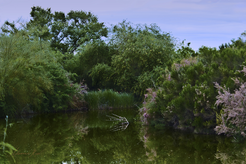 Gilbert Water Ranch pond during a lush spring.