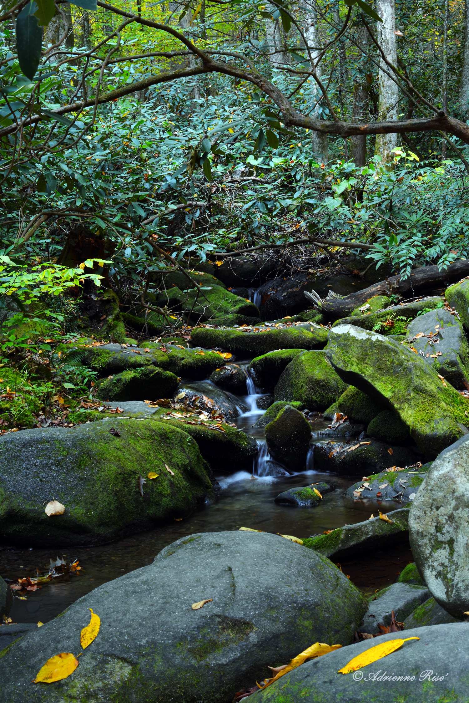 Small waterfall, Smokey Mountain National Park: Nkon D-600 at slow shutter speed