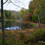 A hidden pond seen from TN-62 near S-298