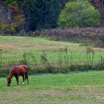 Retired thoroughbred horse