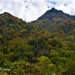 Hillside view of Smokey Mt National Park: Nikon D-800