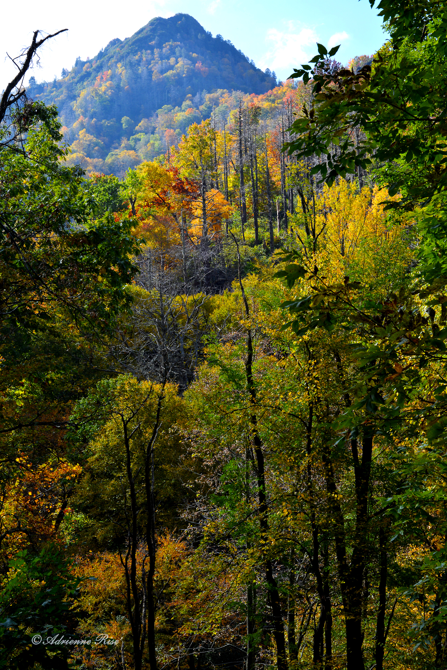 Changing seasons, Great Smokey Mt National Park: Nikon D-600
