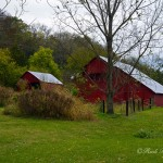 Freshly painted Kentucky red barns